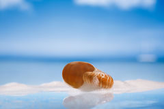 Nautilus shell in foam on wet white glass with reflection Royalty Free Stock Image
