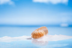 Nautilus shell in foam on wet white glass with reflection Stock Photos