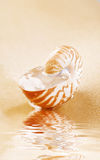 Nautilus shell full of water in sea sand Stock Images