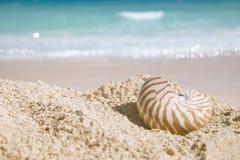 Nautilus shell  on golden beach Stock Photography