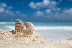 Nautilus shell  on golden beach Royalty Free Stock Images