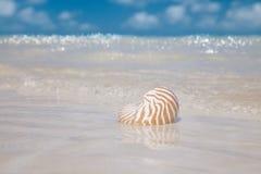 Nautilus shell  on golden beach Stock Image