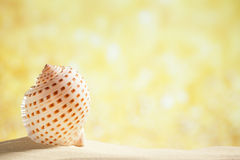 Nautilus shell  golden glitter background Stock Photography