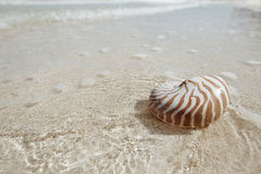 Nautilus shell  in golden sea wave, shallow dof Stock Images