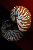 Nautilus shell 1 Royalty Free Stock Photography