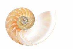 Nautilus shell Royalty Free Stock Photo