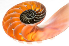 Nautilus shell isolated 4 Royalty Free Stock Photography