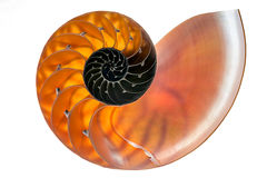 Nautilus shell isolated 1 Royalty Free Stock Photos