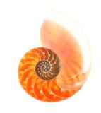 Nautilus shell isolated on white. Background royalty free stock photo