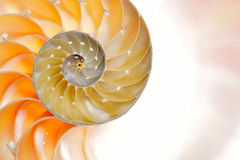 Nautilus shell isolated on white background Royalty Free Stock Images