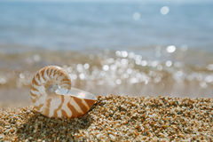 Nautilus shell on the issyk-kul beach sand with glitter. Lake background Royalty Free Stock Image