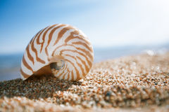 Nautilus shell on the issyk-kul beach sand with lake. And sun background Royalty Free Stock Photography