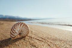 Nautilus shell on the issyk-kul beach sand with mountains on bac. Kground Royalty Free Stock Photography