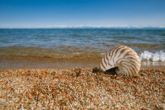 Nautilus shell on the issyk-kul beach sand with mountains on bac. Kground Royalty Free Stock Photos