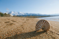 Nautilus shell on the issyk-kul beach sand with mountains on bac. Kground Royalty Free Stock Images