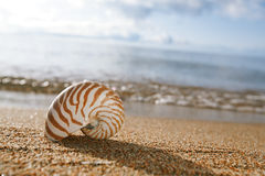 Nautilus shell on the issyk-kul beach sand. With mountains on background Stock Images