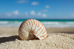 Nautilus shell  with ocean , beach and seascape, shallow dof. Small nautilus shell  with ocean , beach and seascape, shallow dof Stock Image