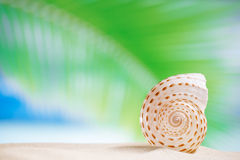 Nautilus shell  with ocean , beach and seascape, shallow dof. Sea shell  with palm leaf , beach and seascapee, shallow dof Royalty Free Stock Image