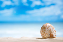 Nautilus shell  with ocean , beach and seascape, shallow dof. Small nautilus shell  with ocean , beach and seascape, shallow dof Royalty Free Stock Photos