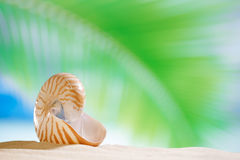 Nautilus shell  with ocean , beach and seascape, shallow dof. Small nautilus shell  with ocean , beach and seascape, shallow dof Stock Photos