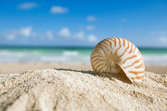 Nautilus shell  with ocean , beach and seascape, shallow dof. Small nautilus shell  with ocean , beach and seascape, shallow dof Stock Photography
