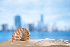 Nautilus shell  with ocean , beach and seascape, shallow dof. Small nautilus shell  with ocean , beach and city, shallow dof Stock Images