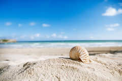 Nautilus shell  with ocean , beach and seascape Royalty Free Stock Photography