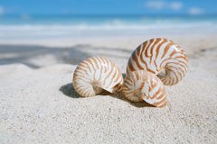 Nautilus shell  with ocean , beach and seascape Stock Photo