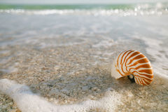 Nautilus shell in ocean with waves under the sun light Stock Photography