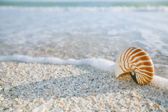Nautilus shell in ocean with waves under the sun light Royalty Free Stock Images