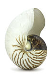Nautilus Shell op Wit Stock Fotografie