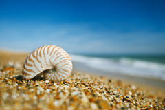Nautilus shell on peblle  beach and sea waves Royalty Free Stock Image
