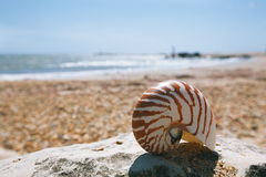 Nautilus shell on peblle beach Royalty Free Stock Photo