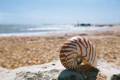Nautilus shell on peblle beach Royalty Free Stock Photo