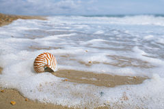 Nautilus shell on peblle beach Stock Photos