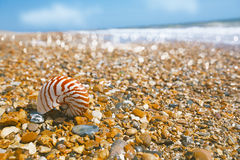 Nautilus shell on peblle beach Stock Images