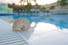 Nautilus shell at resort swimming pool edg Royalty Free Stock Photo