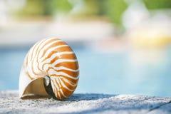 Nautilus shell at resort swimming pool edge Royalty Free Stock Photos