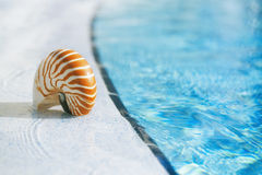 Nautilus shell at resort swimming pool edge. Shallow dof Stock Images