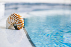 Nautilus shell at resort swimming pool edge. Shallow dof Stock Photos