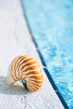 Nautilus shell at resort swimming pool edge Royalty Free Stock Photo