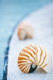 Nautilus shell at resort swimming pool edge Stock Photography