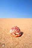 Nautilus shell on sand Royalty Free Stock Images