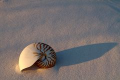 Nautilus Shell In Sand Royalty Free Stock Photos