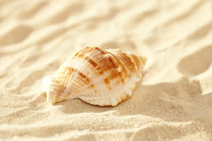 Nautilus shell on sand, beach grass Royalty Free Stock Photo