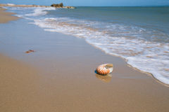 Nautilus shell on sand beach and sea waves Royalty Free Stock Photography