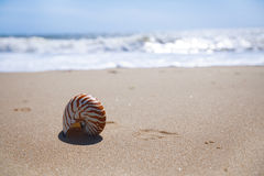 Nautilus shell on sand beach and sea waves Royalty Free Stock Photos