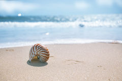 Nautilus shell on sand beach and sea waves Royalty Free Stock Images