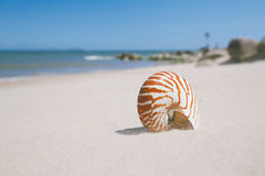 Nautilus shell on sandy wind beach Royalty Free Stock Photo