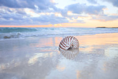 Nautilus shell on sea beach , sunrise. Royalty Free Stock Photo